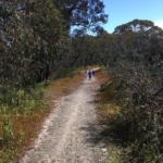 Bushwalking with friends